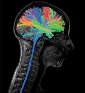 Neuroscience 2