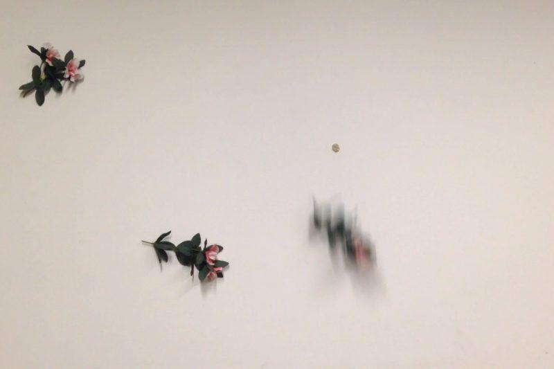 Zephyr and Aura's breath (falling)