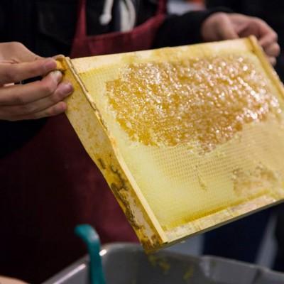 Honey workshop with Alvéole