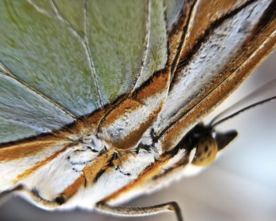 Butterfly, taken through the mocroscope