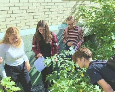 Exploring the Ecological Succesion zone at Dawson Campus