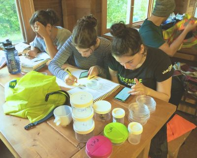 Working hard in the Nature Center, Arundel Qc