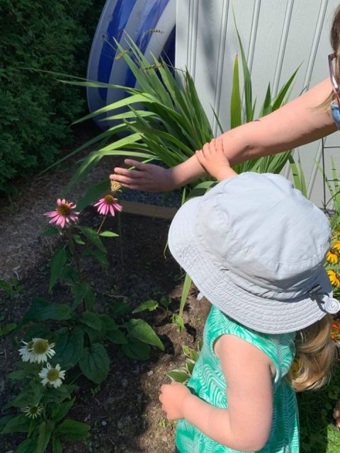 Butterfly release photo CP