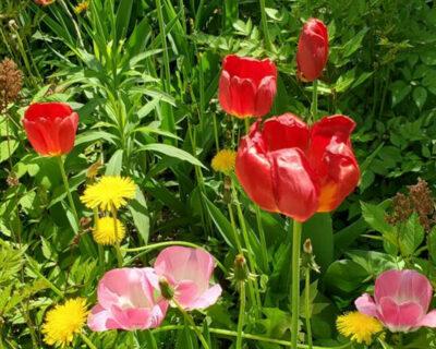 D-News-Featured-Image-Peace-Garden