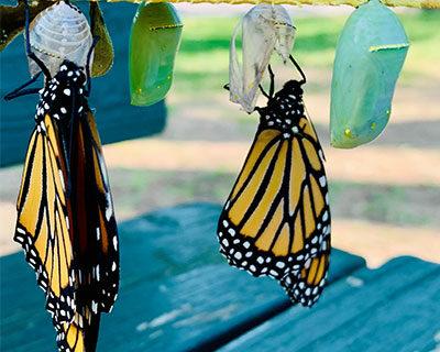 Homepage-News-Item-New-Butterflies