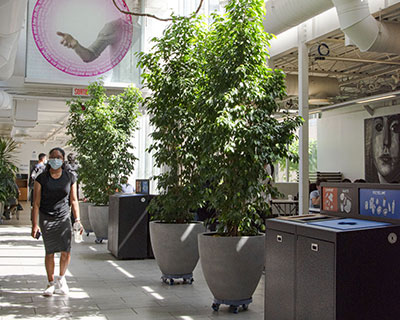 Homepage-News-Item-Plants-Atrium