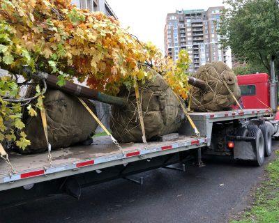 trees on truck