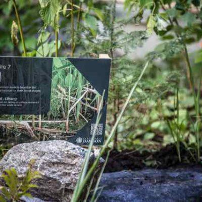 Dawson College – Biodiversity Days-80
