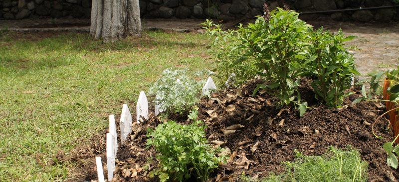 project- garden
