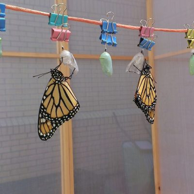 Butterfly clothesline