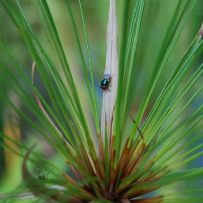 Plant with Beetle