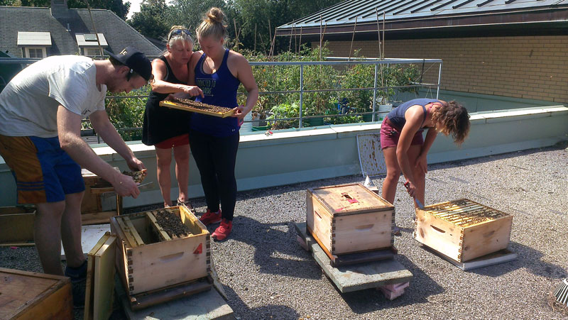 Checking in on the bees
